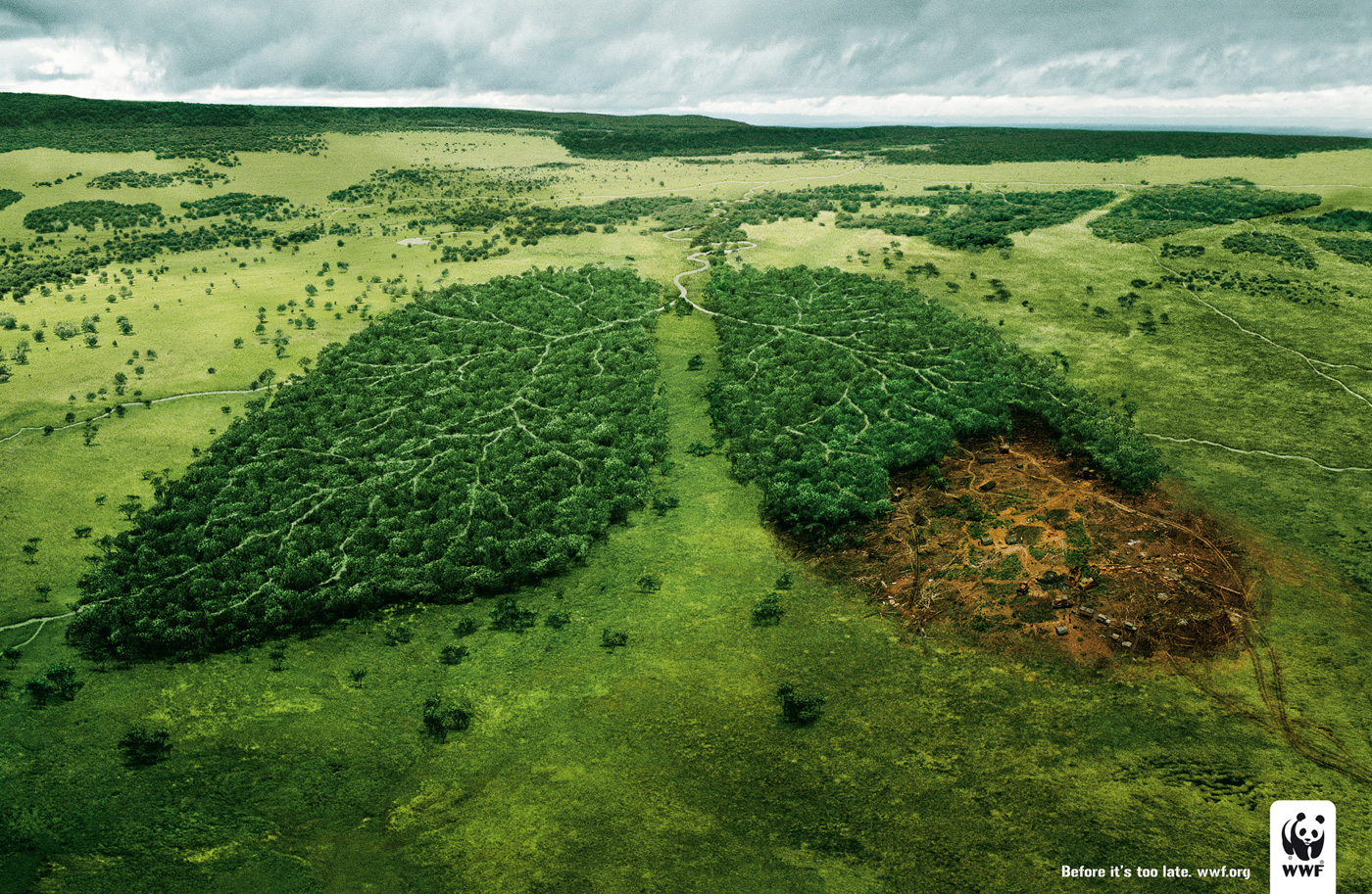 visual_storytelling_WWF